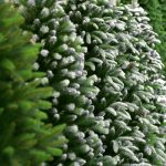 Picking the Right Artificial Christmas Tree