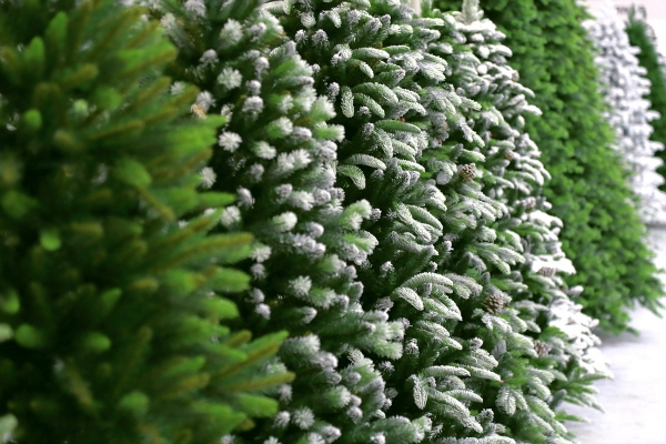 Conifer New Year's Christmas background from green artificial Christmas trees in the snow.